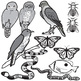 Animal Mimicry Clip Art