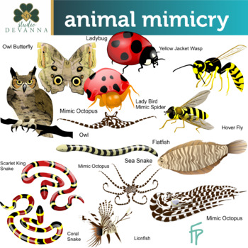 Animal Mimicry Clipart
