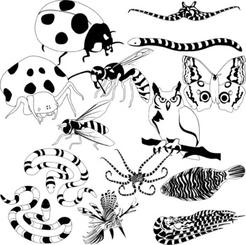 Animal Mimicry Clipart By Studio Devanna