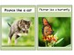 Animal Movement Flashcards
