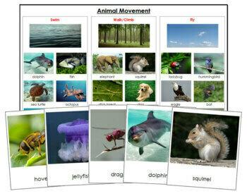Animal Movement - Swim, Walk, Fly