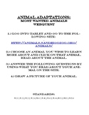 Animal Needs & Adaptations: Most Wanted Animals Webquest