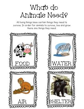 Animal Needs Unit
