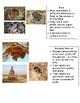 Animal Nests
