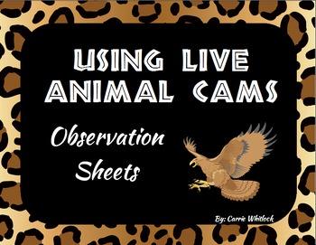 Animal Observations - Webcam Observation Sheets