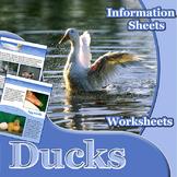 Animal Outlines: Ducks