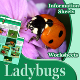 Animal Outlines: Ladybugs