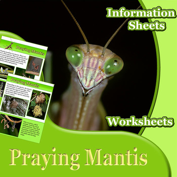 Animal Outlines: Praying Mantis