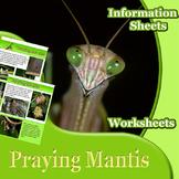 Animal Outlines: Praying Mantis