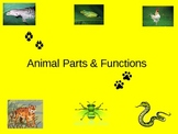 Animal Parts & Functions