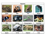 Animal Parts Game:  Exploring Animal Body Parts and Their Uses