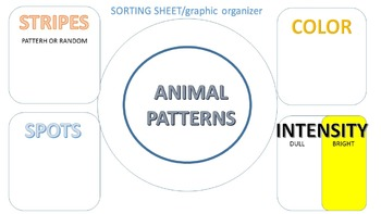 Animal Pattern Bingo