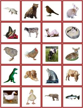 Animal Photo Cards / PECS