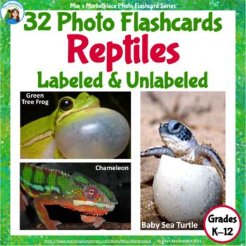 Animal Photo Flashcards: Amphibians and Reptiles