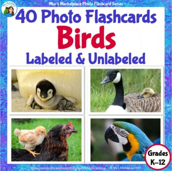 Animal Photo Flashcards: Birds