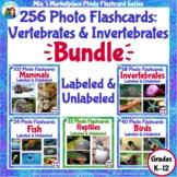 256 Animal Photo Flashcards: Vertebrates and Invertebrates
