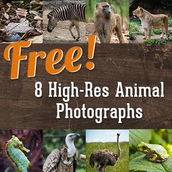 Animal Photo Sampler Pack