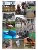Animal Photographs - Commercial Use Ok!