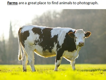 Animal Photography Assets