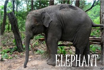 Animal Photos/Flashcards Bundle - 104 high quality photos!