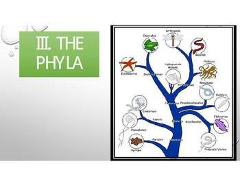 Animal Phyla Bundle