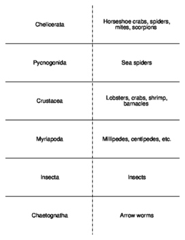 Animal Phyla Flash Cards