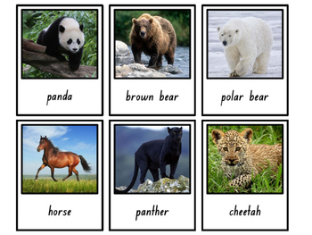 Classifying Animals {Polaroid Picture Cards}