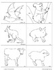 Animal Picture Cards