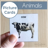 Animal Picture Cards   Photo Cards Visuals Special Education & Speech