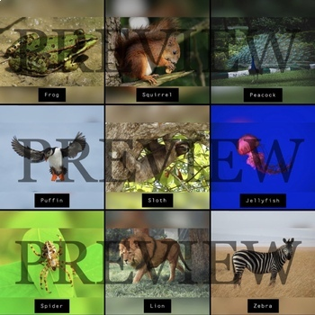 Animal Picture Cue Cards - Preview