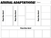 Animal & Plant Adaptation Interactive Notebook Pages  **EDITABLE**