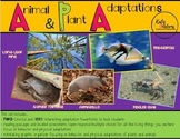 Animal & Plant Adaptations: Focus on Behavior & Physical A