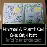 Animal Cell and Plant Cell Cut & Paste