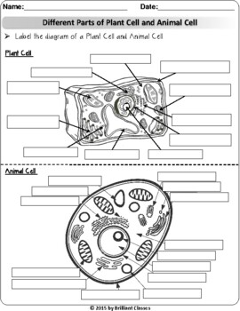 Animal/Plant Cell: Labeling, Venn diagram, Cell Parts Review/research  Worksheets