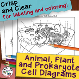 Animal Plant Prokaryote Cell Coloring Diagram and Question Pages