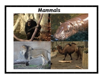 Animal Posters #2