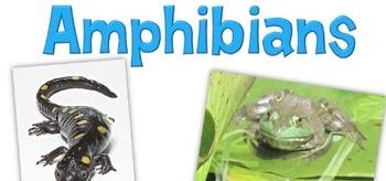 Animal Poster-Amphibian