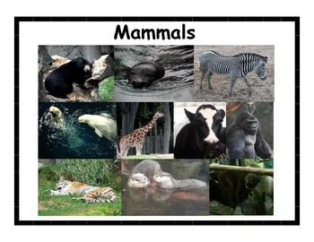 Animal Posters