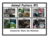 Animal Posters #3
