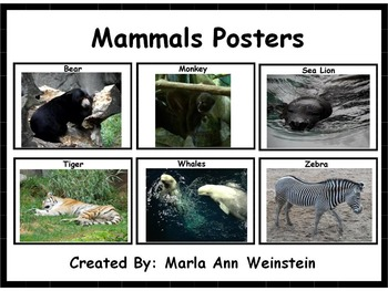 Animal Posters Bundle