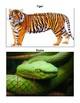 Animal Print Matching Activity