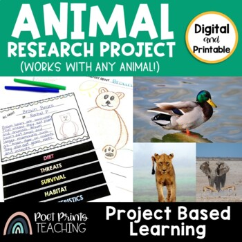 Animal Projects, Differentiated