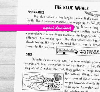 Animal Reading Comprehension