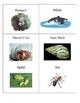 Animal Relationships - Card Game