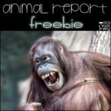 Animal Report Template Freebie