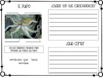 Animal Report in Spanish (Sea Animals)