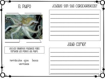 Animal Report in Spanish (Sea Animals)