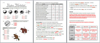 Animal Reproduction, Development, and Classification Review Worksheet and Teache