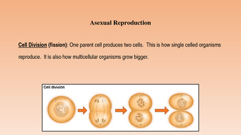 Animal Reproduction and Development Notes PowerPoint