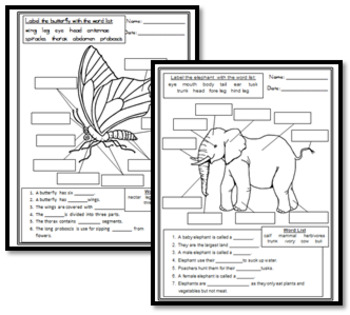 Animal Research Assignments and Worksheets